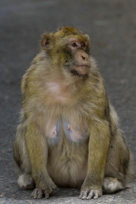 macaco 09 (1 de 1)