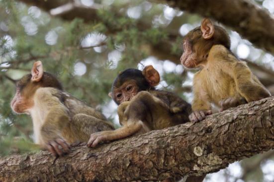 macaco 12 (1 de 1)