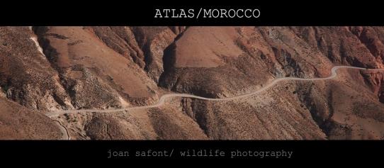 Marroc-31