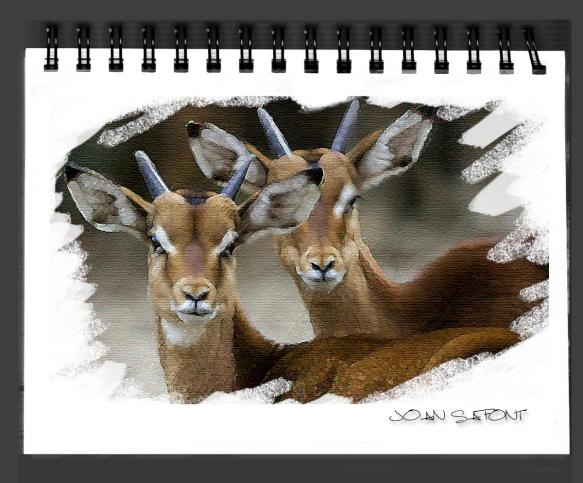cuaderno1
