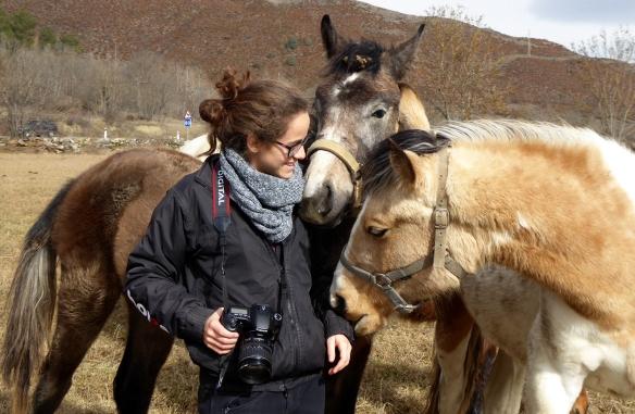 cavalls i anna
